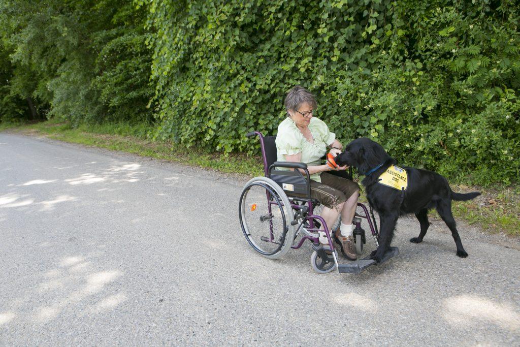 Trainerin Maria Gerstmann im Rollstuhl mit schwarzen Flat Coated Retriever der ihr einen Gegenstand in die Hand gibt.